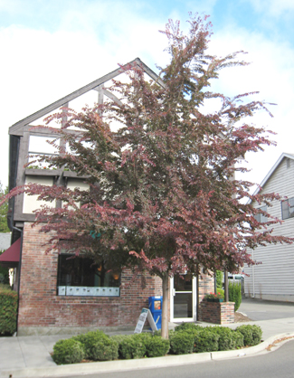 Frontier Elm in Burien